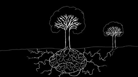 """Tree roots form a sort of """"neural network"""" with one another, in an antifragile complex adaptive system 