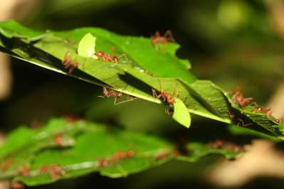 Creature Feature: Ants Don't Have Traffic Jams | All About Ants | Scoop.it