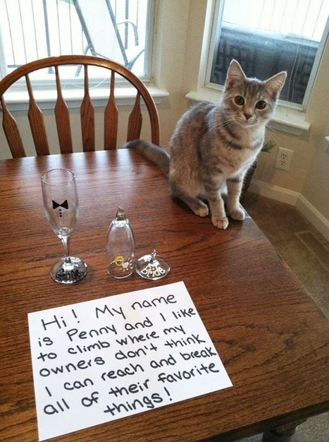 23 Cat Shaming Pictures All Cat Owners Will Understand | Vloasis humor | Scoop.it