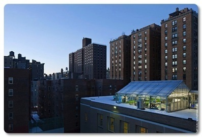 NYC Rooftop Farm Classroom | Sustainable Urban Agriculture | Scoop.it