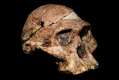 A Taste for Raw Meat May Have Helped Shape Human Evolution | Science, Technology, and Current Futurism | Scoop.it