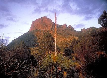 Int'l Call for Big Bend Nat'l Park Artist Residencies, Texas - Art Rubicon