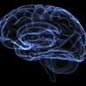 Cognition et al.