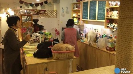 Korean coffee culture, from cat cafes to artisanal roasters... | Coffee News | Scoop.it