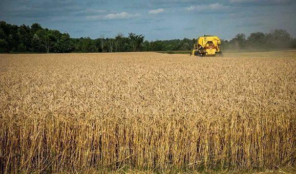 Tunisie: La récolte des céréales pour la saison 2018-2019 atteint un record !