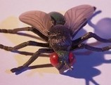Hombre e insectos: ¿por qué somos tan distintos si nuestros genes se parecen? | Bichos en Clase | Scoop.it