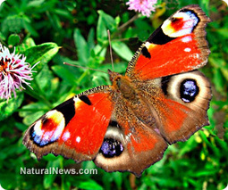 Scientists develop amazing new most #waterproof surface ever that mimics plant leaves, butterfly wings | News You Can Use - NO PINKSLIME | Scoop.it