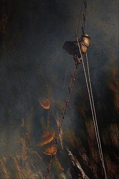 Apiculteurs de l'Extrême dans les Montagnes de l'Himalaya par Andrew Newey   Abeilles, intoxications et informations   Scoop.it