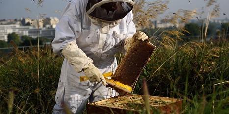 Après un printemps pluvieux, la récolte de miel s'annonce catastrophique | Chronique d'un pays où il ne se passe rien... ou presque ! | Scoop.it