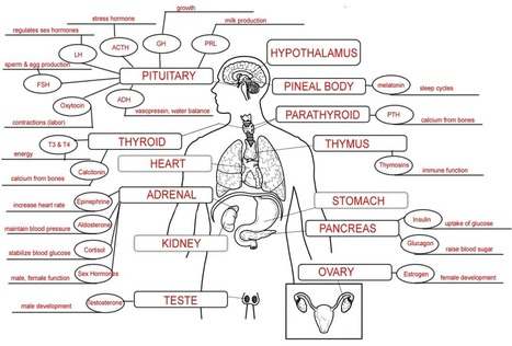 Endocrine System Concept Map | Application of t
