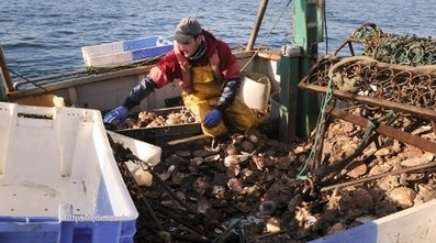 French scallops cleaned in China then sent back | FCHS AP HUMAN GEOGRAPHY | Scoop.it