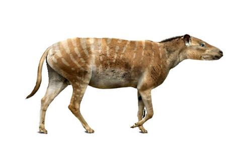 Descubren nueva especie de mamífero en l...