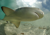 Venezuela Bans Shark Finning, Establishes Shark Sanctuary | Ocean Conservation | Scoop.it