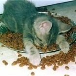 Transitioning Dry Food Addicts to Canned Food - Pt 5   Pedegru   Animals Make Life Better   Scoop.it