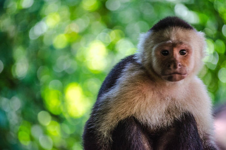With Help of Facebook, Costa Rica Bans Hunting of Wildlife   Saving the Wild: Nature Conservation in the Caucasus   Scoop.it