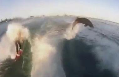Video: Dolphins ride waves alongside wakeskater off St. Pete Beach | Cool Random Stuff | Scoop.it