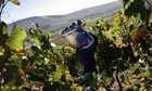 South African wine industry rooted in human misery, says report | Food issues | Scoop.it