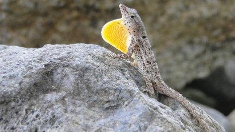 Darwinian Lizards | Geology | Scoop.it