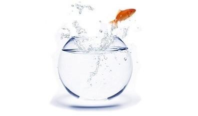 Pourquoi j'aimerais être un fish... | Canonbis poker | Scoop.it