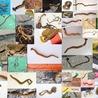 Variétés entomologiques