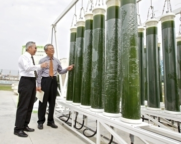 Taiwan Pursuing Microalgae Bioenergy :Algae Industry Magazine | Sustain Our Earth | Scoop.it