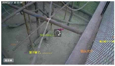 Visitez le Zoo du Pékin via le moteur de recherche Baidu. | Applications du Net | Scoop.it