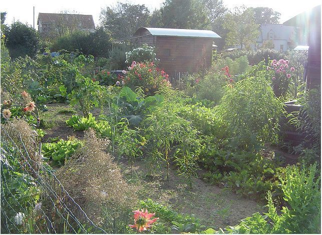 Jardin ouvrier du parc de la fourmili re for Jardin ouvrier