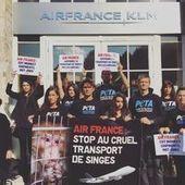 """""""Dix raisons de mettre fin aux tests sur les animaux"""" en laboratoire"""