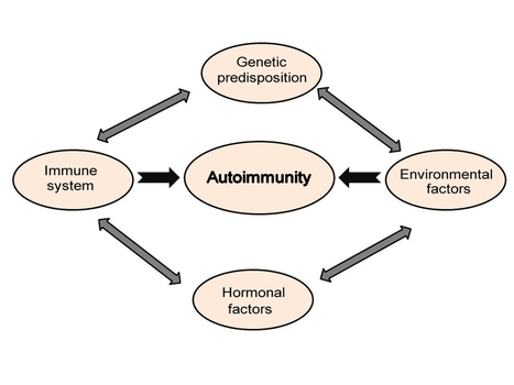 Stress, Brain and Hormones and the Development of Organ Specific Autoimmunity | Immunology for University Students | Scoop.it