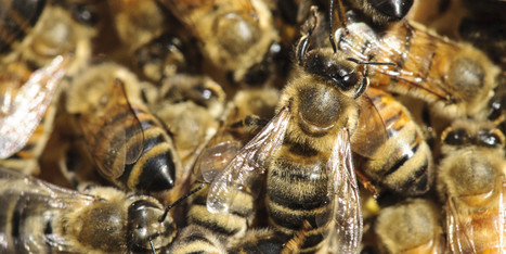 The Buzz About Bees, Climate Change and Your Garden | Food issues | Scoop.it