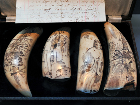 Museum's 'whale bone porn' leaves Vancouver mother 'extremely disturbed' | Canada | | Archaeology News | Scoop.it
