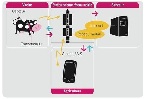 Freitag: Translating M2M vehicles to M2M animals - RCR Wireless News | Machine To Machine | Scoop.it