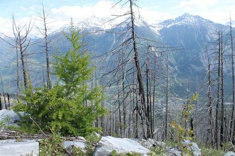 Un paradis pour les insectes : dix ans après l'incendie, la forêt reprend ses droits | EntomoNews | Scoop.it