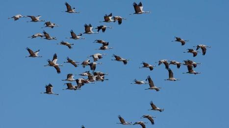 Dia mundial de las aves: Beneficios de proteger nuestro patrimonio ornitológico | Madres de Día Pamplona | Scoop.it