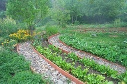 Permaculture: Antidote to Agribusiness and Consumer Culture ... | Permaculture Digest | Scoop.it