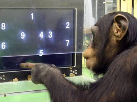 Video: Chimpanzees have faster working memory than humans, according to study | Neurobiology | Scoop.it