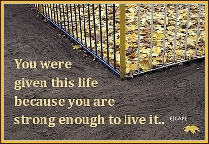 You were given this life because you are strong enough to live it.   Epic Awesomeness   Scoop.it
