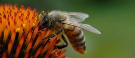 Does local honey diminish allergies?   EARTHCOVE - a place for peaceful interplanetary & interspecies relations   Scoop.it