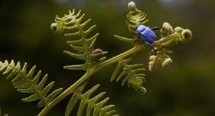 Il y a urgence à préserver la flore et la faune | Ecotourisme au Maroc | Scoop.it