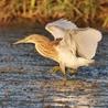 Zones humides - Ramsar - Océans