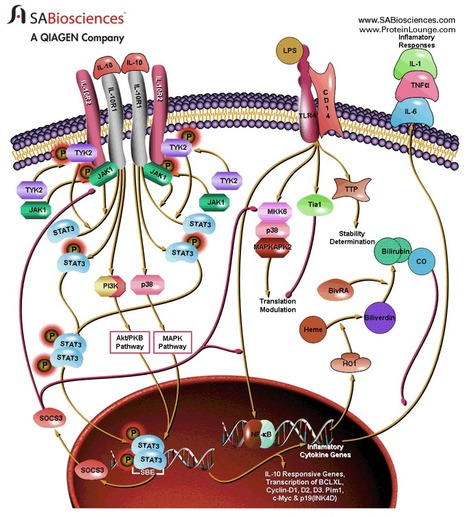 vaccine' in Cancer Immunotherapy Review and Collection