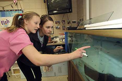 Trout in the Classroom gives students hands-on experience | Aqua-tnet | Scoop.it