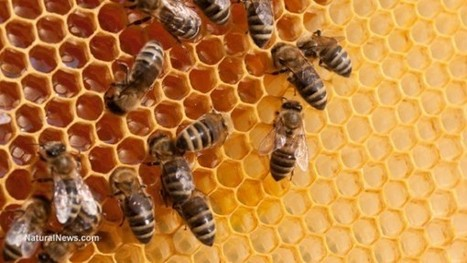 #America #corrupt #EPA acknowledges deadly effects of #pesticides on #bees, but refuses to restrict their use | Messenger for mother Earth | Scoop.it