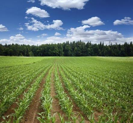 Cutting carbon emissions could have indirect effects on hunger - ACS (2015)   Food Policy   Scoop.it