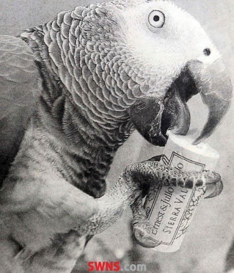 World's oldest parrot dies aged 55 after telling owner 'cheerio' | No Such Thing As The News | Scoop.it