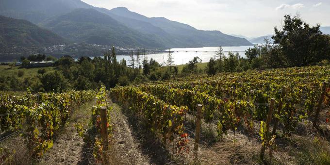 FRANCE : Les vignes des Hautes-Alpes, «front pionnier» face au changement climatique