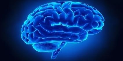 5 principes issus des neurosciences pour favoriser l'apprentissage en formation   E-learning Insight   Scoop.it
