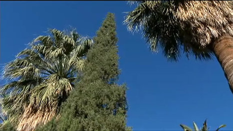 U of A's thousands of trees provide much more than shade | KVOA (TV-Channel 4 Tucson) | CALS in the News | Scoop.it