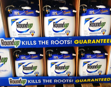"'Roundup' Glyphosate Hormone Inhibitor Monsanto's toxic herbicide In Our Food Chain at ""Extreme Levels"" 