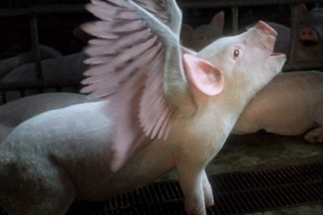 WATCH: The Most Shockingly Beautiful Video About Factory Farming -- From Australia | YOUR FOOD, YOUR ENVIRONMENT, YOUR HEALTH: #Biotech #GMOs #Pesticides #Chemicals #FactoryFarms #CAFOs #BigFood | Scoop.it